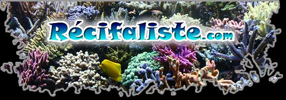 Bannière Recifaliste.com